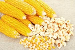 kukuruz za kokice