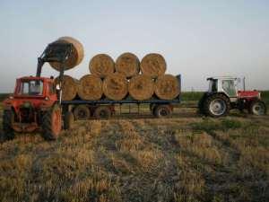 tovarenje rolo bala na traktorsku prikolicu