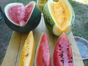 lubenica zute boje