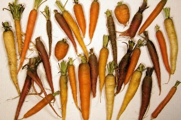 Šargarepe različitih boja i oblika