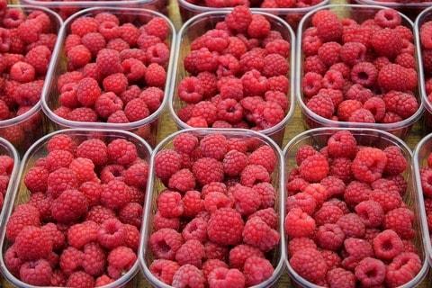 malinini plodovi nakon branja