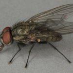 Muva klijanaca
