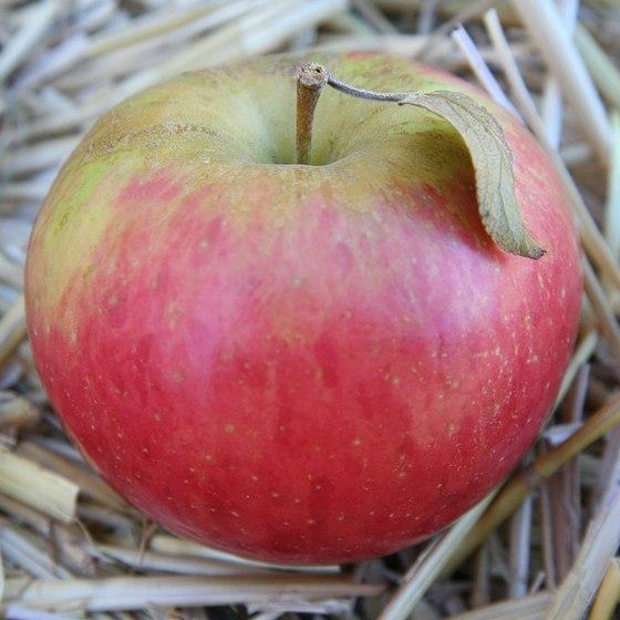 jabukin plod
